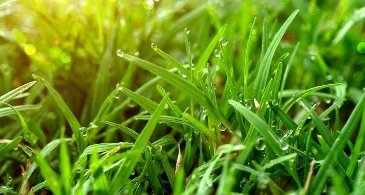 Что делать со скошенной травой на дачном участке